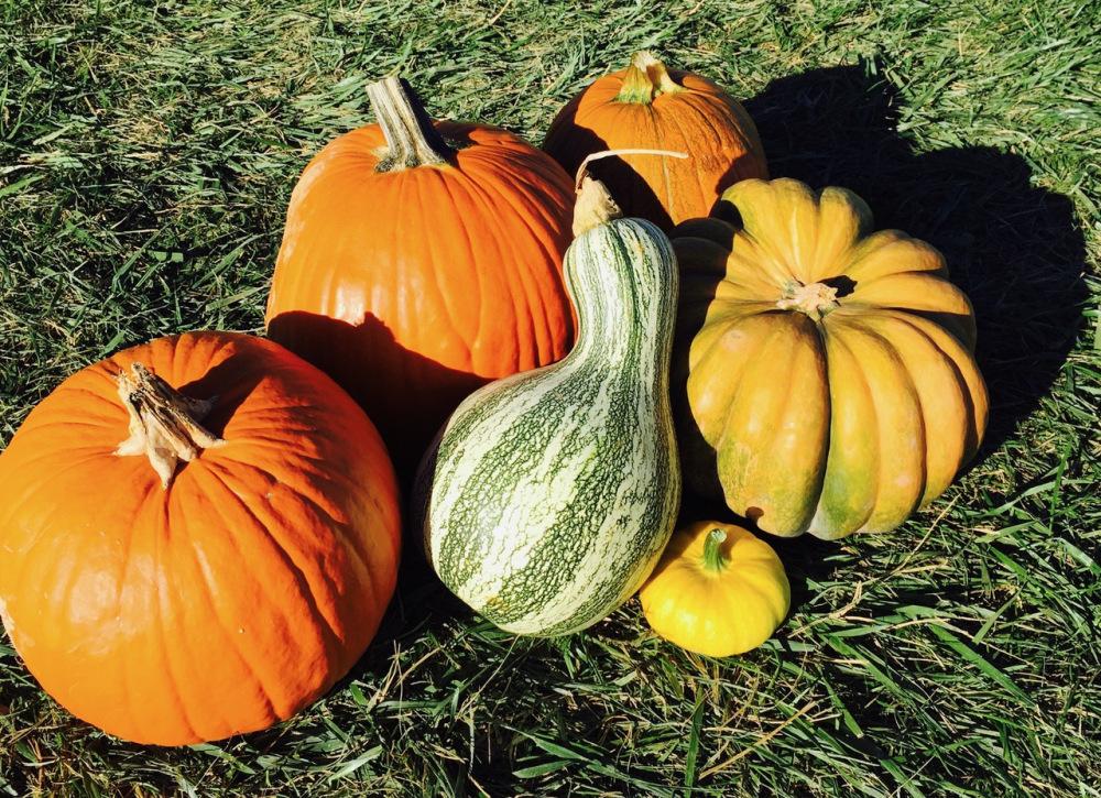 Deco-edibles from the pumpkin farm